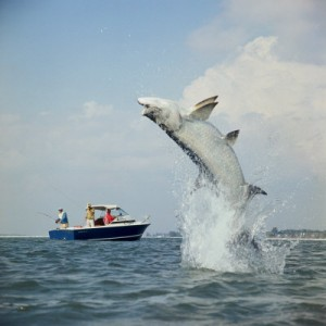 Florida 39 s potential conservation blunder for Florida temporary fishing license