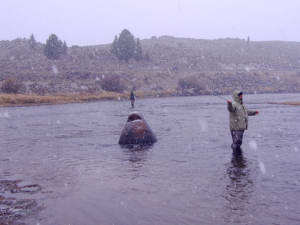 fly fishing in the snow 300x225